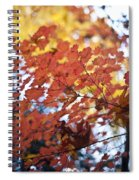Autumn Brilliance Spiral Notebook