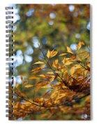 Autumn Crescendo Spiral Notebook
