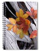 Autumn Driftwood 2 Spiral Notebook