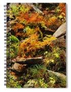 Autumn Ferns On Pickle Creek At Hawn State Park Spiral Notebook