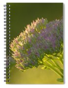Autumn Joy Sedum Spiral Notebook