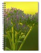Autumn Joy Sedum With Spider Spiral Notebook