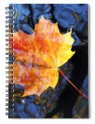 Autumn Leaf On The Water Level Spiral Notebook