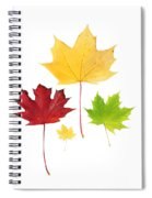 Autumn Leaves Isolated Spiral Notebook