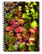 Autumn Rainbow  Spiral Notebook