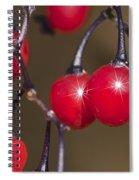 Autumn Red Berry Sparkle Spiral Notebook
