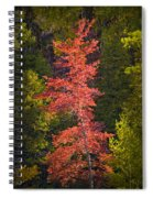 Autumn Scene Of Colorful Red Tree Along The Little Manistee River In Michigan No. 0902 Spiral Notebook
