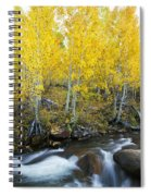 Autumn Stream Iv Spiral Notebook