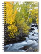 Autumn Stream V Spiral Notebook