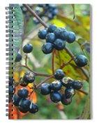 Autumn Viburnum Berries Series #2 Spiral Notebook