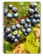 Autumn Viburnum Berries Series #3 Spiral Notebook