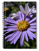 Autumn's Aster Spiral Notebook