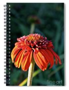Autumn's Cone Flower Spiral Notebook