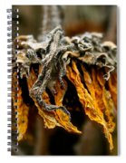 Autumn's Gold Spiral Notebook