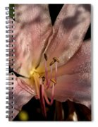 Autumn's Lily Spiral Notebook