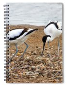 Avocets At Nest Spiral Notebook