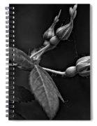 Awakening Monochrome Spiral Notebook