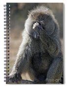 Baboon With Headache Spiral Notebook