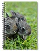 Baby Bunnies Spiral Notebook
