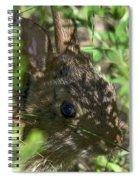Baby Eastern Cottontail Rabbit Dmam011 Spiral Notebook