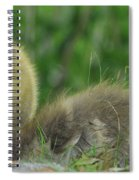 Baby Goose Takes A Break Spiral Notebook