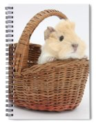Baby Guinea Pig In A Wicker Basket Spiral Notebook