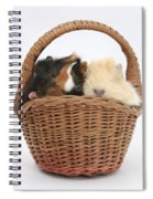 Baby Guinea Pigs In A Wicker Basket Spiral Notebook