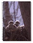 Baby Hawks Spiral Notebook