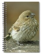 Baby House Finch Spiral Notebook