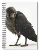 Baby Jackdaw Spiral Notebook