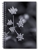 Baby Queen Anne's Lace Monochrome Spiral Notebook