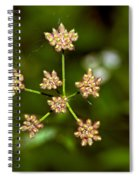 Baby Queen Anne's Lace Spiral Notebook