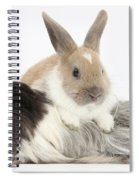Baby Rabbit And Long-haired Guinea Pig Spiral Notebook