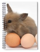 Baby Rabbit With Eggs Spiral Notebook