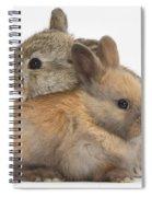 Baby Rabbits Spiral Notebook