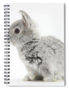Baby Silver Rabbit Spiral Notebook