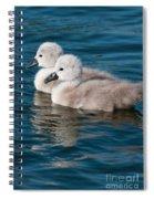 Baby Swans Spiral Notebook