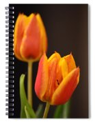 Baby Tulips Close Up Macro Spiral Notebook