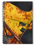 Back-lit Golden Leaf Spiral Notebook