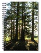 Back Lit Trees Spiral Notebook