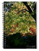 Backlit Autumn Spiral Notebook