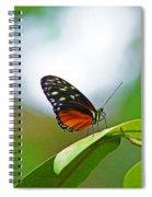 Backlit Butterfly Spiral Notebook
