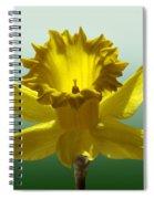 Backlit Daffodil Spiral Notebook