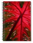 Backlit Red Leaf Spiral Notebook