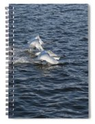 Backlit Swans Spiral Notebook