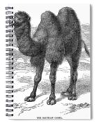 Bactrian Camel Spiral Notebook