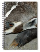 Badger On The Loose Spiral Notebook
