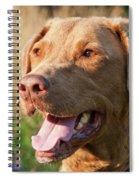 Bailee 1106 Spiral Notebook