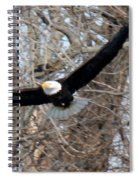 Bald Eagle At Full Wingspan Spiral Notebook