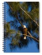 Bald Eagle Spiral Notebook
